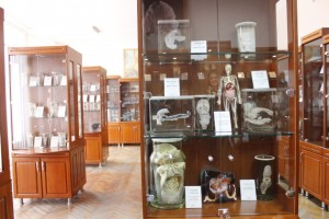 Muzeu anatimieG_6772
